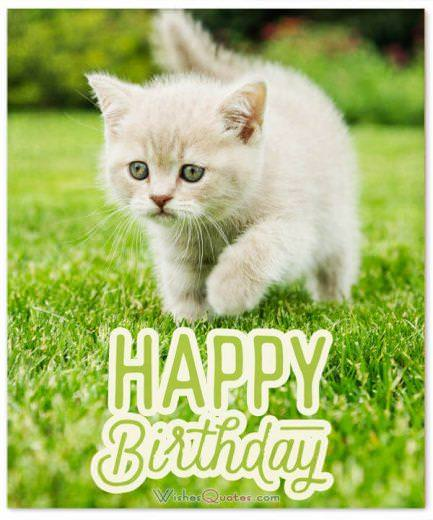 Happy Birthday Wish with Cute Cat - Birthday Wishes for Friends