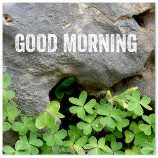 Good morning by a rock