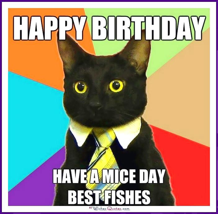Birthday Meme with a Cat: Happy Father's Day. To the best Dad in the world.