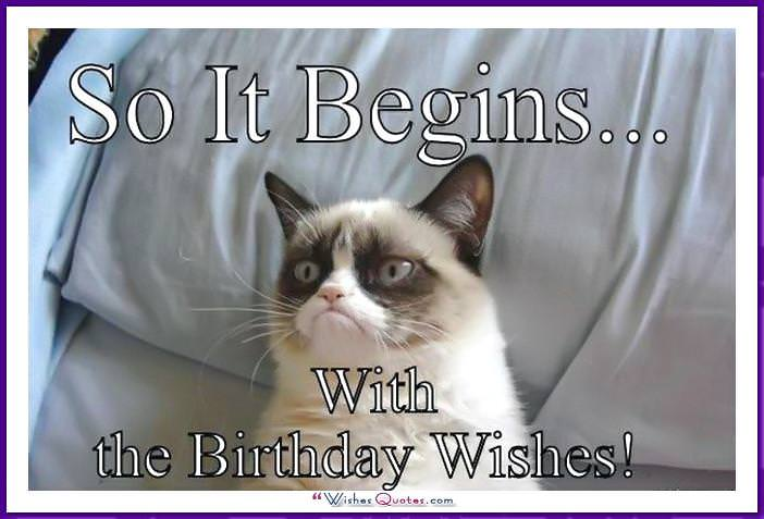 Birthday Meme With A Cat So It Begins The Wishes