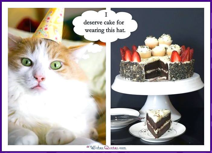 Birthday Meme with a Cat: I deserve cake for wearing this hat.