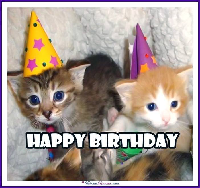 Birthday_Memes_Cats_Funny_07 happy birthday memes with funny cats, dogs and cute animals