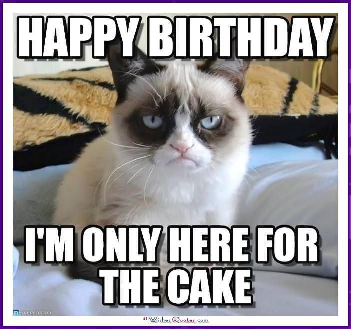 Birthday Meme with a Cat: I'm only here for the cake!