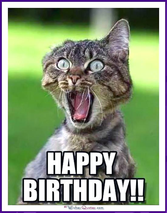 Birthday Meme with a Cat: Happy Birthday!