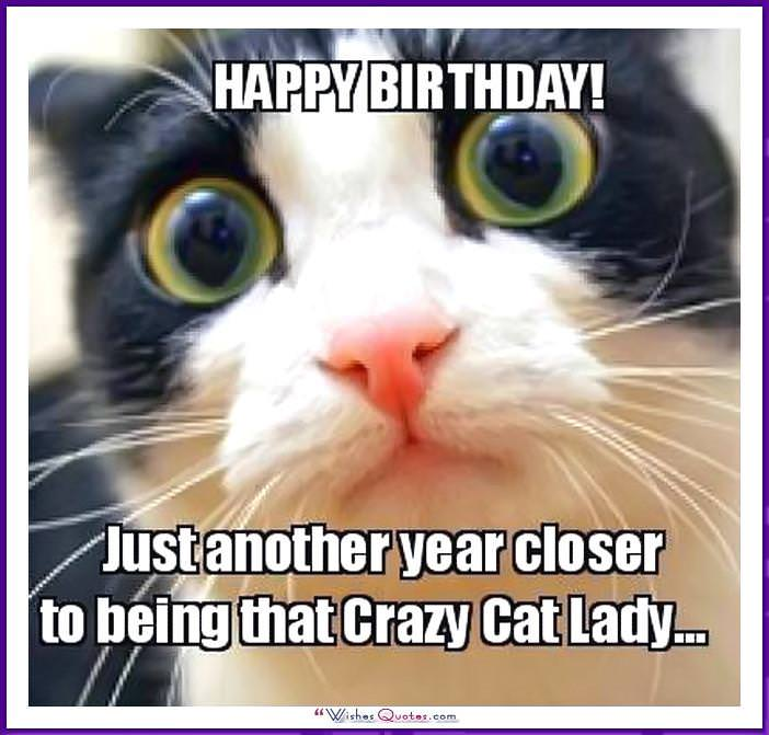 Birthday Meme With A Cat Another Year Closer To Being That Crazy Lady