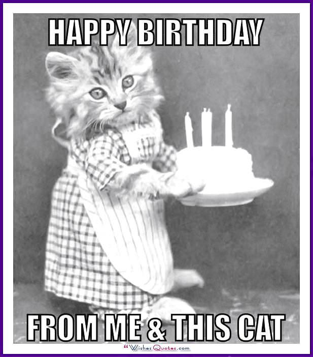 Birthday Meme with a Cat: From me and this cat!
