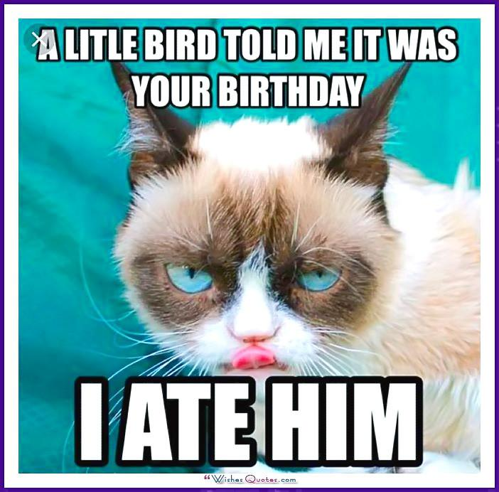 Happy birthday memes with funny cats dogs and cute animals birthday meme with a cat a little bird told me it was your birthday voltagebd