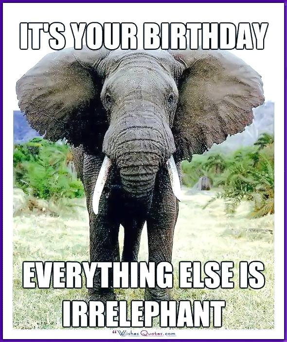 Funny Animal Birthday Meme: Everything else is irrelephant!