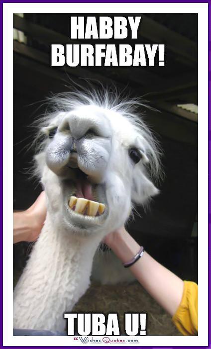 Funny Animal Birthday Meme: