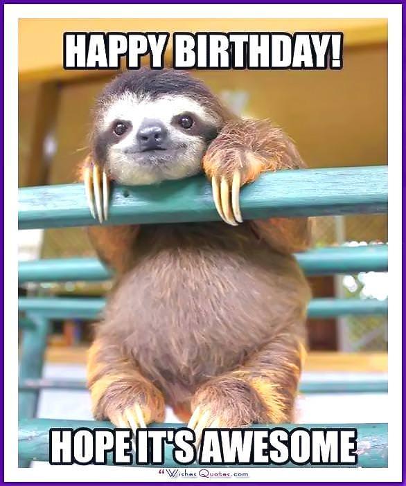 Funny Animal Birthday Meme: Happy Birthday! Hope it's awesome!
