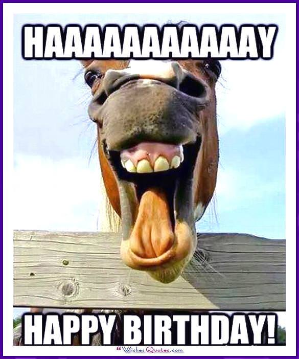 Funny Animal Birthday Meme: HAAAAAAAY! Happy Birthday!
