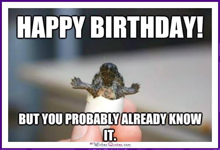 Funny Animal Birthday Meme: Happy birthday! But you probably already know it.