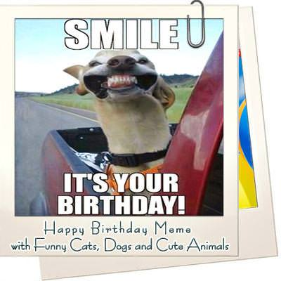 Birthday memes cats dogs