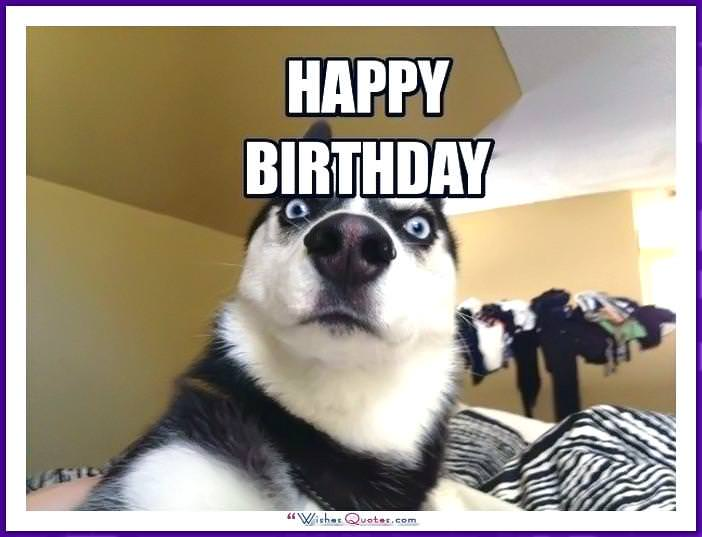Funny Dog Birthday Meme: Happy Birthday
