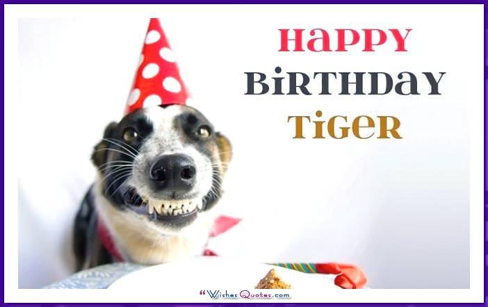 Funny Dog Birthday Meme: Happy Birthday tiger!