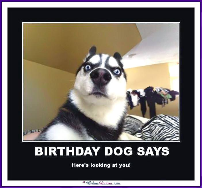 Funny Dog Birthday Meme: Birthday dog says