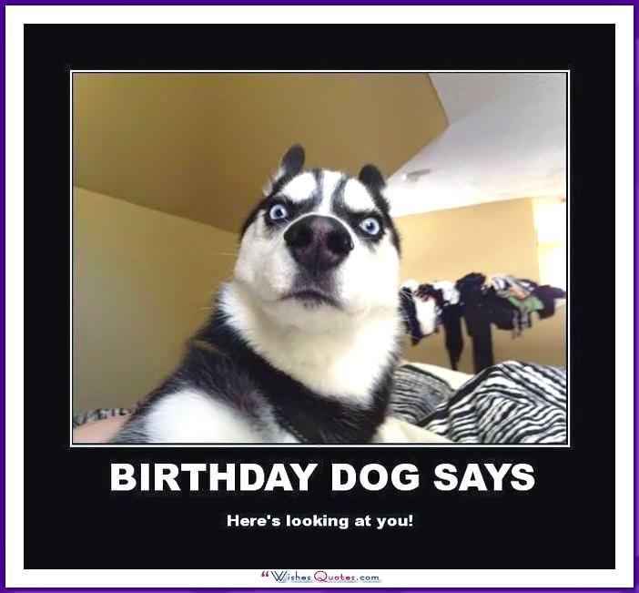 Funny Dog Birthday Meme: Birthday dog says