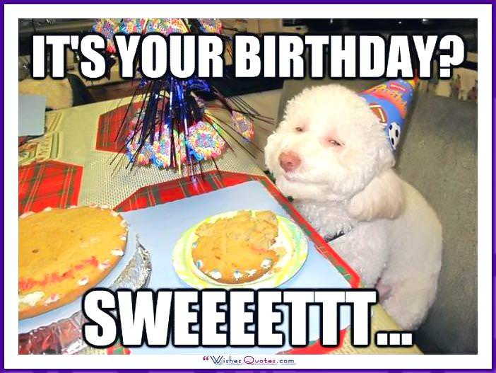 Funny Dog Birthday Meme: It's your birthday? Sweeettt....