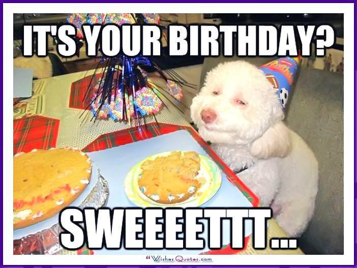 Funny Dog Birthday Meme: It's your birthday? Sweeettt....