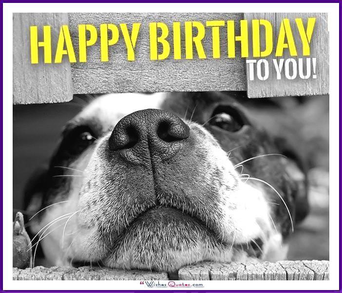 Funny Dog Birthday Meme: Happy birthday to you