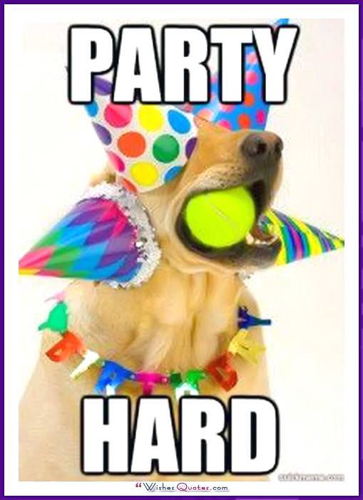 Funny Dog Birthday Meme: Party Hard