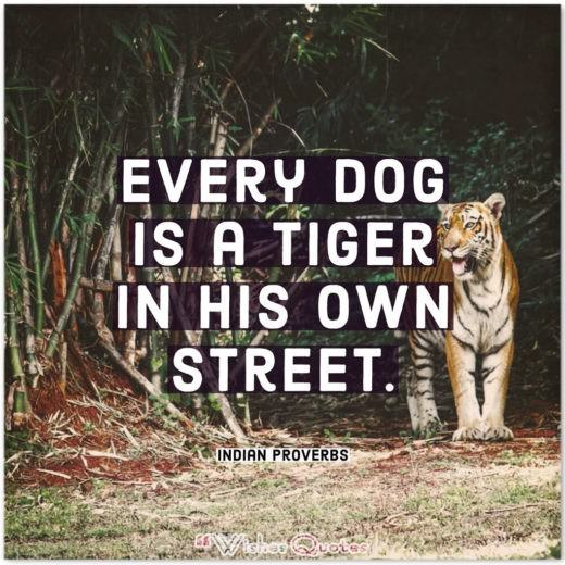 Indian Proverbs and Quotes - Every dog is a tiger in his own street.