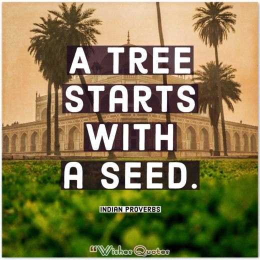 Indian Proverbs - A tree starts with a seed.